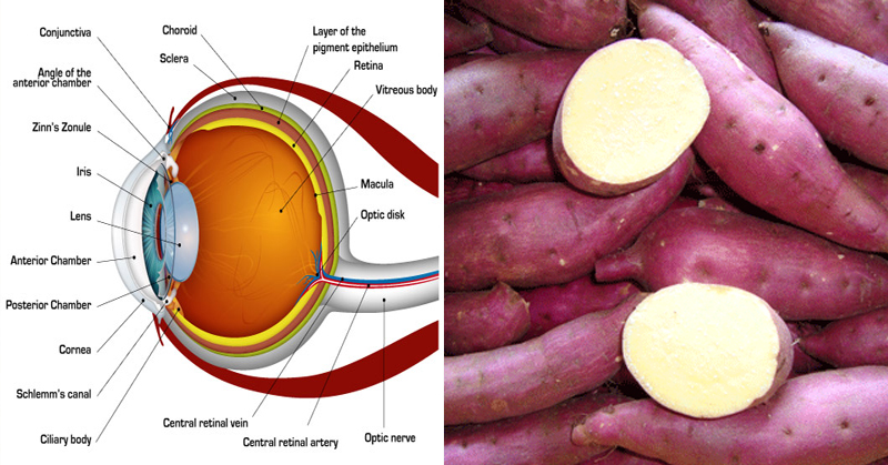 Sweet potatoes prevent blindness